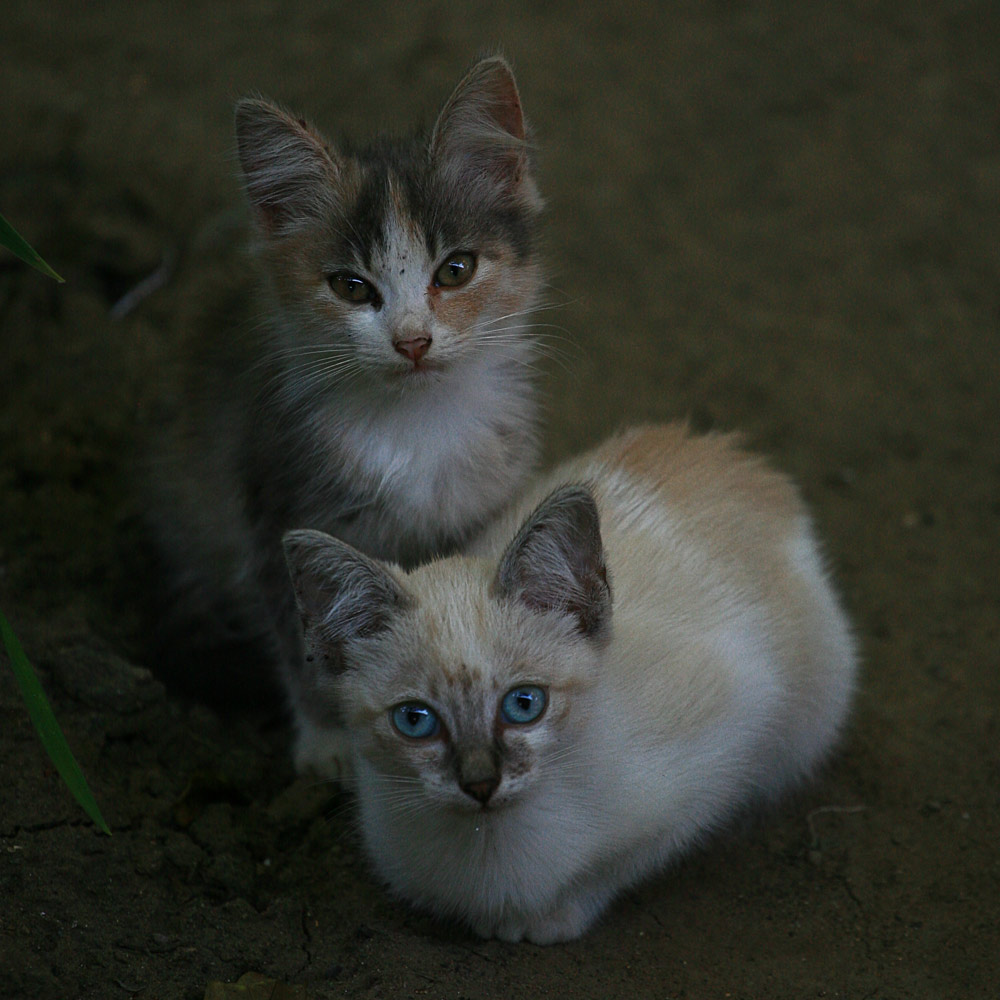 Фото кошек котов и котят